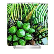Coconut Tree   Sold Shower Curtain
