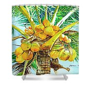 Coconut Series II Shower Curtain
