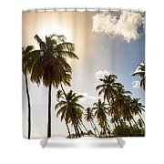 Coconut Trees Shower Curtain