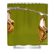 Cocooned Gulf Fritillary Butterflies Shower Curtain