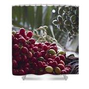 Cocos Nucifera - Niu Mikihilina - Palma - Niu - Arecaceae -  Palmae Shower Curtain