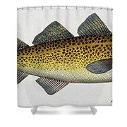 Cod Shower Curtain