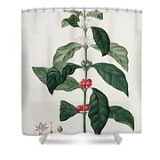 Coffea Arabica From Phytographie Shower Curtain