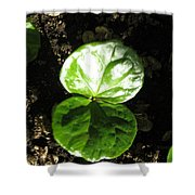 Coffee Plant The Shiny Thick Green Butterfly Look Plant Gives The Great Promise Of A Cash Crop To Th Shower Curtain