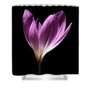 Colchicum #3 Shower Curtain