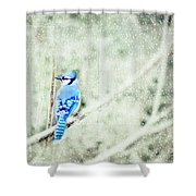 Cold Day For A Blue Jay Shower Curtain