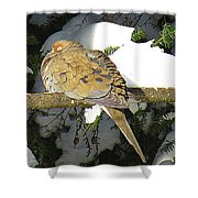 Cold Dove Shower Curtain