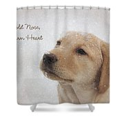 Cold Nose Warm Heart Shower Curtain by Lori Deiter