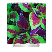 Coleus Color Shower Curtain