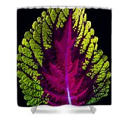 Coleus Leaf Shower Curtain