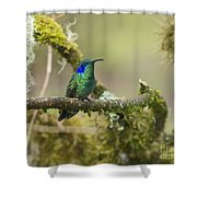 Colibri Thalassinus... Shower Curtain