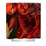 Collage - Amaryllis - Red 01- Elena Yakubovich Shower Curtain