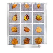 Collage - Leaves On Granite 1 Shower Curtain