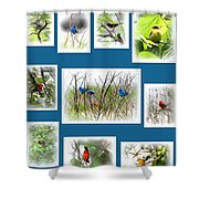Collage Of Dauphin Island 22 Shower Curtain