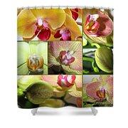 Collage Orchids 01yellow Green - Elena Yakubovich Shower Curtain