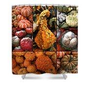 Collage - Pumpkins - Gourds - Elena Yakubovich Shower Curtain