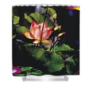 Sunset Lily Shower Curtain