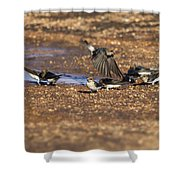Collecting Mud Shower Curtain by Douglas Barnard