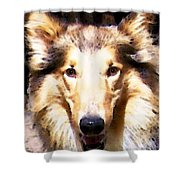 Collie Dog Art - Sunshine Shower Curtain by Sharon Cummings