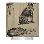 Collie, Retriever, Alstian And Keeshund Shower Curtain