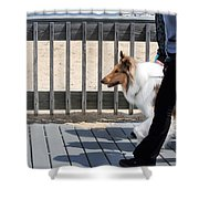 Collie Walk Shower Curtain