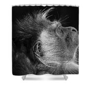 Colobus At Rest Shower Curtain