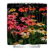 Coloratura Shower Curtain