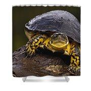 Colombian Wood Turtle Amazon Ecuador Shower Curtain