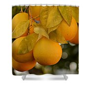 Super Bright Oranges On A Branch Shower Curtain