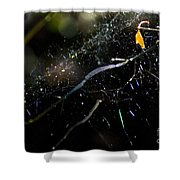 Color Dots Spider Net Shower Curtain