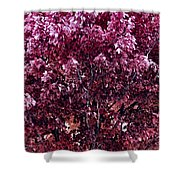 Color In The Tree 01 Shower Curtain