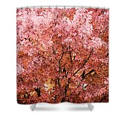 Color In The Tree 03 Shower Curtain