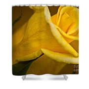 Color Of Friendship Shower Curtain