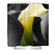 Color On Black And White Shower Curtain