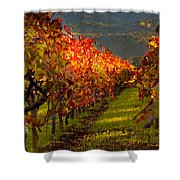 Color On The Vine Shower Curtain by Bill Gallagher