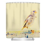 Color Sparrow Shower Curtain