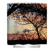 Color Through The Trees Shower Curtain
