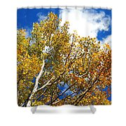 Colorado Aspens And Blue Skies Shower Curtain