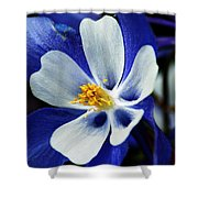 Colorado Columbine Shower Curtain