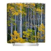 Colorado Fall Color Shower Curtain