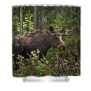 Colorado Moose Shower Curtain