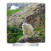 Colorado Mountain Goat Shower Curtain
