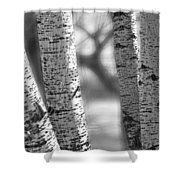 Colorado White Birch Trees In Black And White Shower Curtain