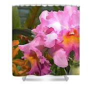 Colorful Assorted Cattleya Orchids Shower Curtain