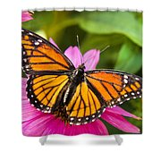 Orange Viceroy Butterfly Shower Curtain