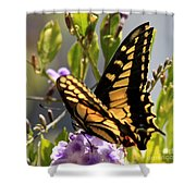 Colorful Butterfly Square Shower Curtain