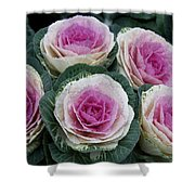 Colorful Cabbage  Shower Curtain