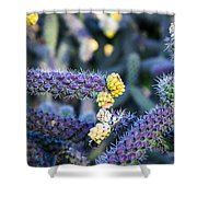 Colorful Cactus Red Purple Green Yellow Plant Fine Art Photography Print  Shower Curtain