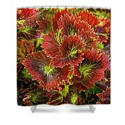 Colorful Coleus Shower Curtain