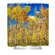 Colorful Colorado Autumn Aspen Trees Shower Curtain